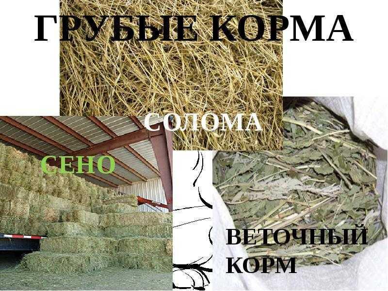 razvedenie-ovec-podrobno-foto-video-uslovija-soderzhanija-i-uhod-31