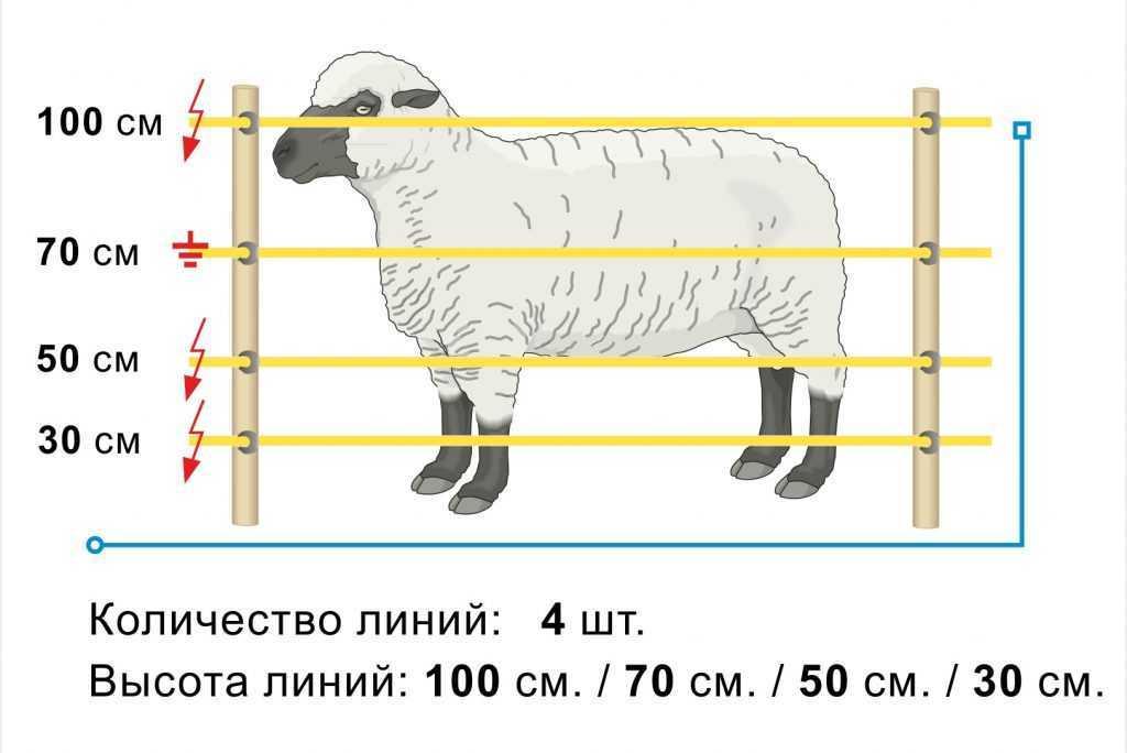 razvedenie-ovec-podrobno-foto-video-uslovija-soderzhanija-i-uhod-017