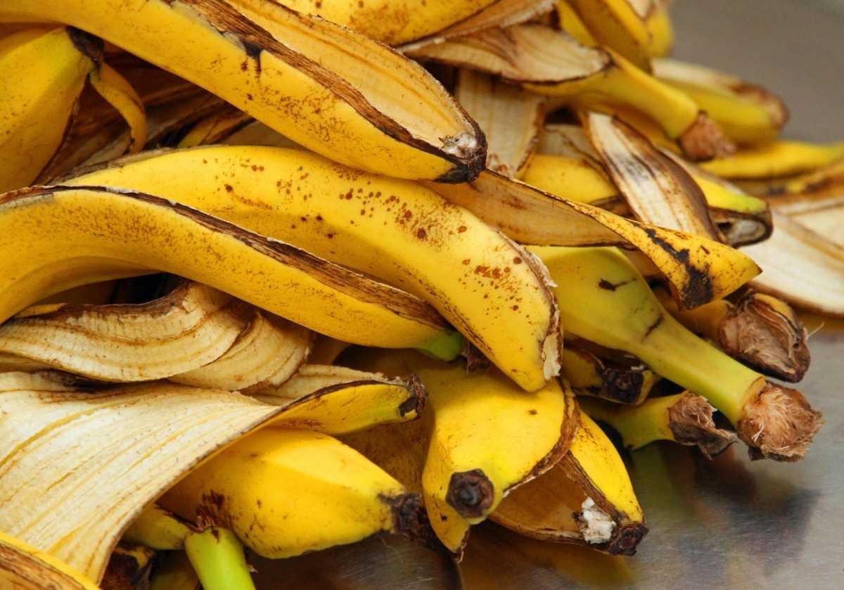 bananovoe-udobrenie-foto-video-udobrenie-iz-bananovoy-kozhuryi-5