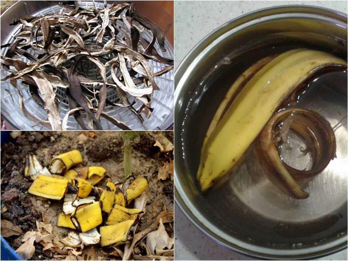 bananovoe-udobrenie-foto-video-udobrenie-iz-bananovoy-kozhuryi-3