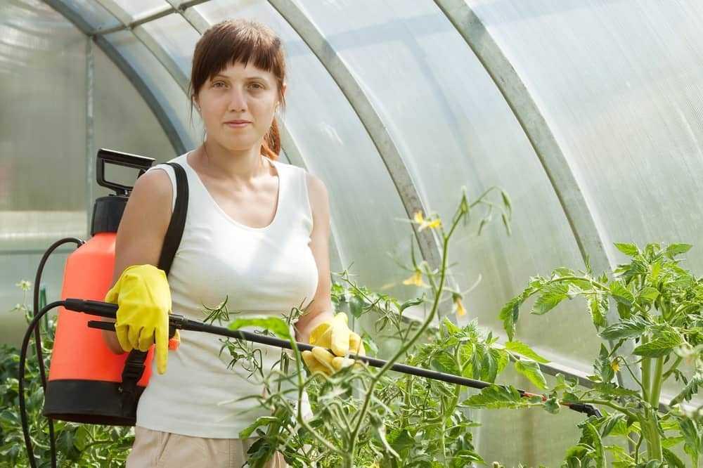 podkormka-pomidorov-v-teplitse-foto-video-chem-udobryat-tomatyi-v-teplitse-6