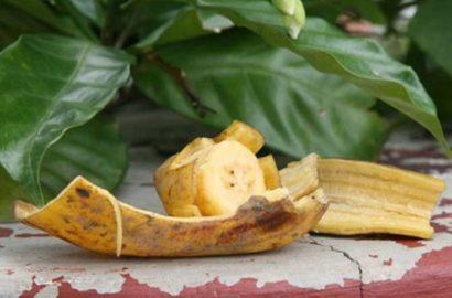 bananovoe-udobrenie-foto-video-udobrenie-iz-bananovoy-kozhuryi