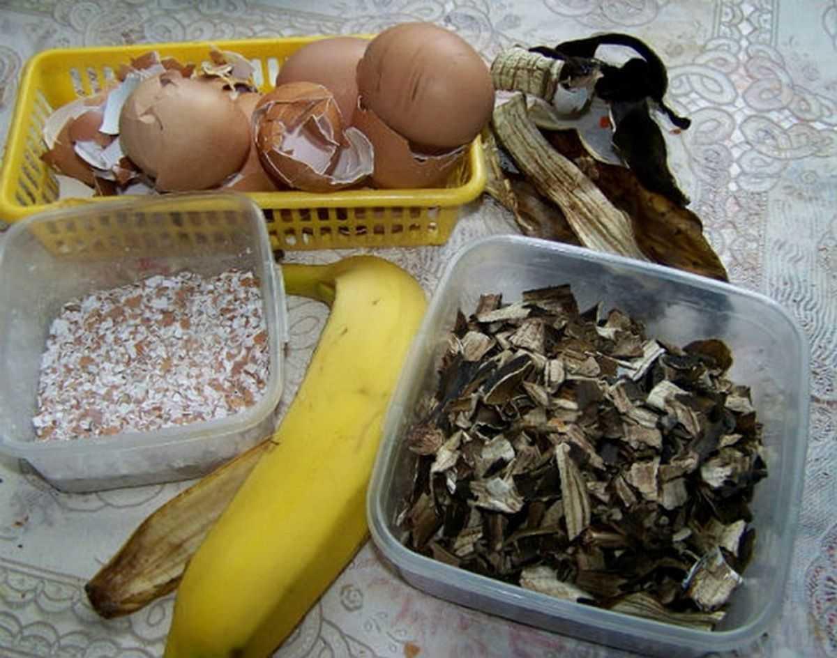 bananovoe-udobrenie-foto-video-udobrenie-iz-bananovoy-kozhuryi-9