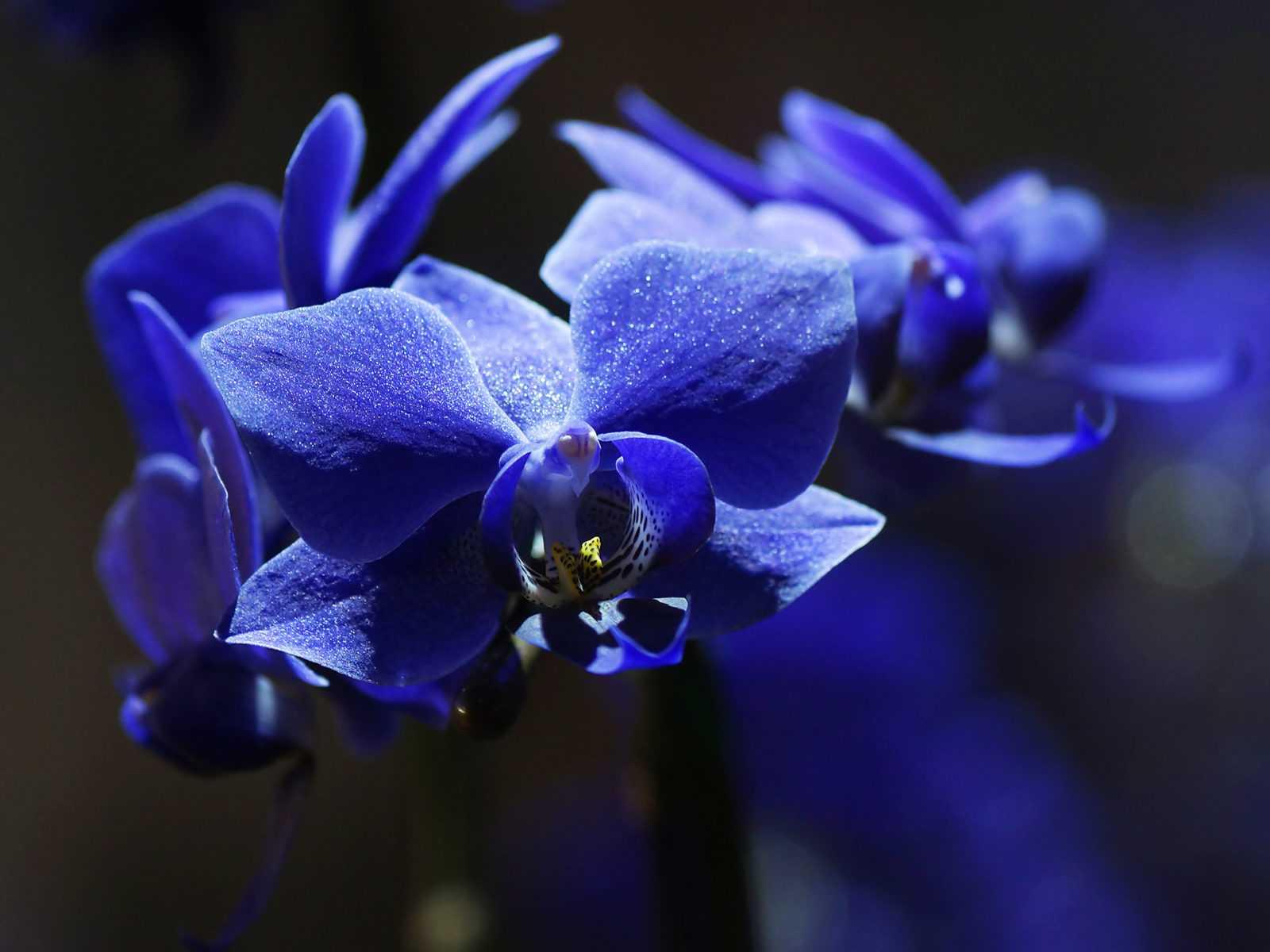 Картинка на рабочий стол синие цветы