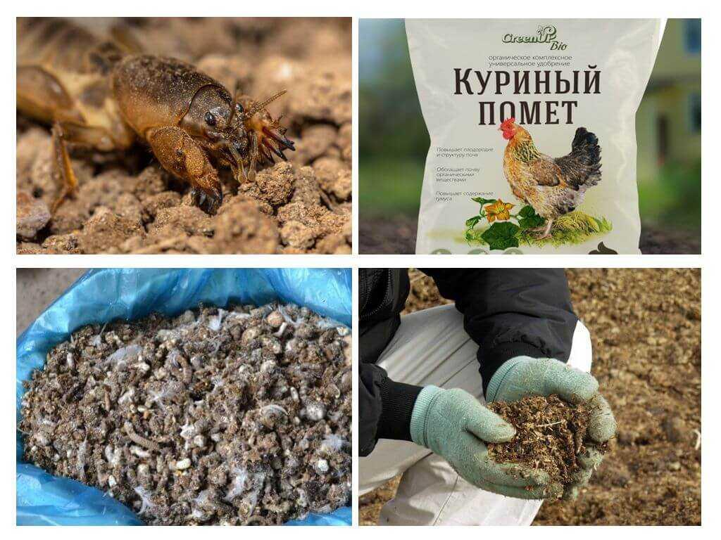 podkormka-pomidorov-v-teplitse-foto-video-chem-udobryat-tomatyi-v-teplitse-3