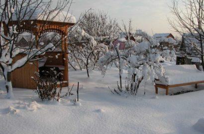 rabotyi-v-sadu-v-yanvare-foto-video-sezonnyiy-kalendar-rabot-na-yanvar