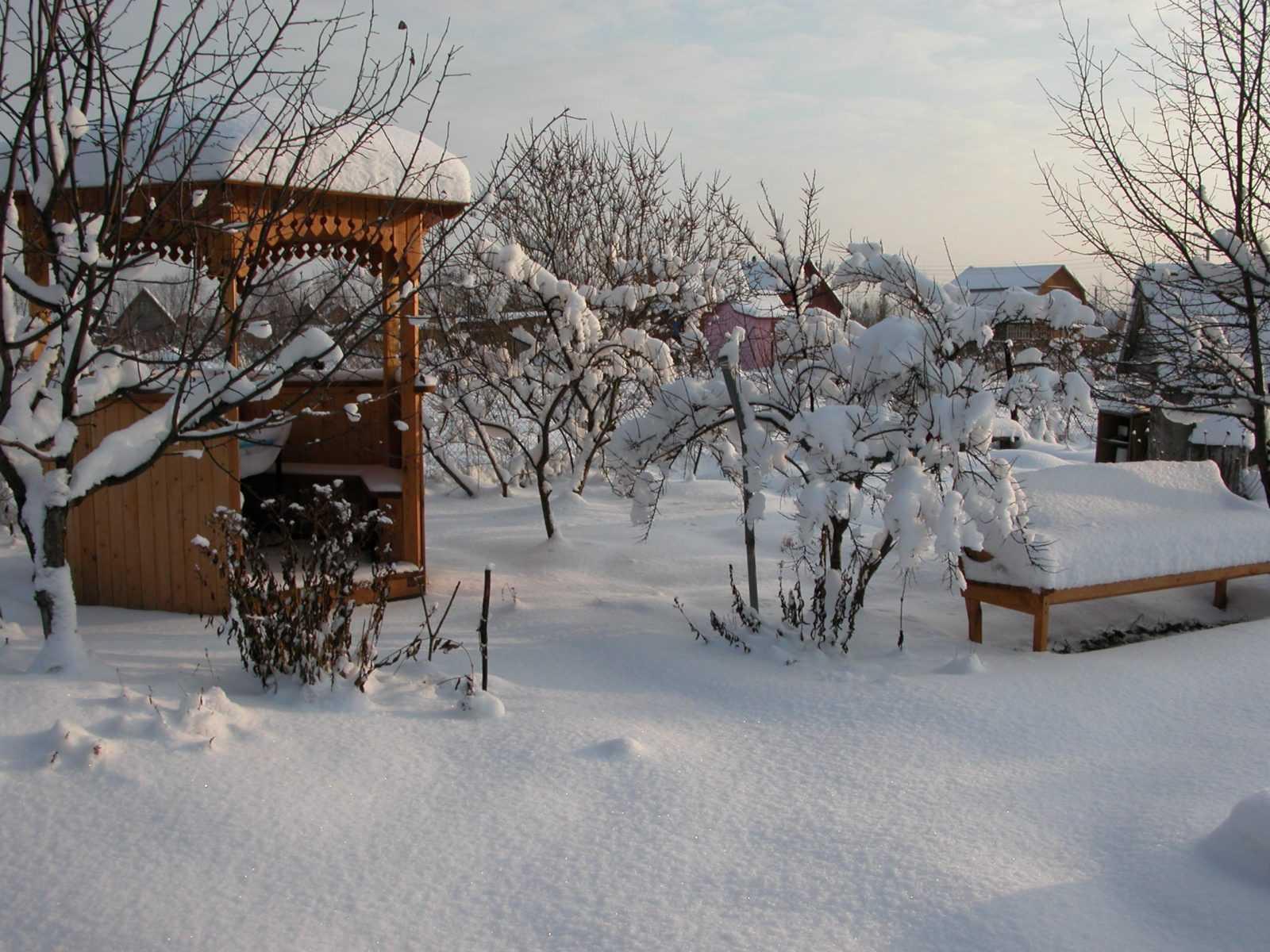 rabotyi-v-sadu-v-yanvare-foto-video-sezonnyiy-kalendar-rabot-na-yanvar-1