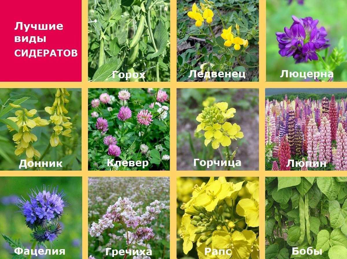 organicheskie-ili-mineralnyie-udobreniya-foto-video-kakie-udobreniya-vyibrat-11