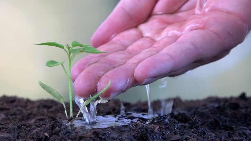 kak-podgotovit-semena-k-posevu-poleznye-sovety-i-rekomendatsii-4