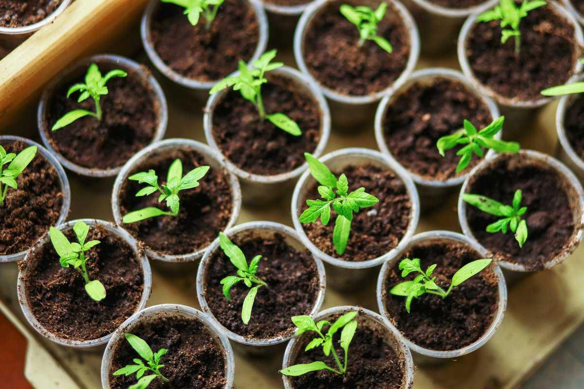kak-podgotovit-semena-k-posevu-poleznye-sovety-i-rekomendatsii-1