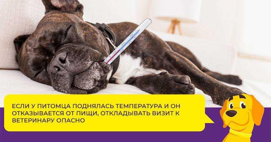 tsistit-u-sobak-foto-video-prichiny-simptomy-profilaktika-i-lechenie-2