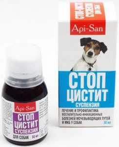tsistit-u-sobak-foto-video-prichiny-simptomy-profilaktika-i-lechenie-8