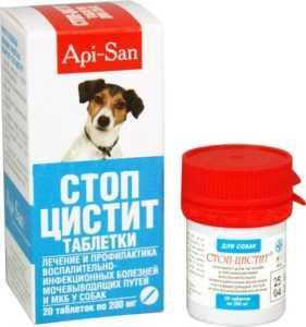 tsistit-u-sobak-foto-video-prichiny-simptomy-profilaktika-i-lechenie-9
