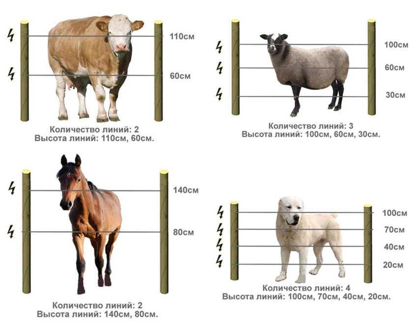 elektropastuh-chto-takoe-elektricheskaya-izgorod-ustrojstvo-i-primenenie-1