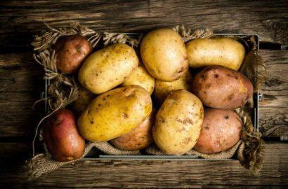 gnili-kartofelya-foto-video-pochemu-gniyot-kartofel-meryi-zashhityi-i-borbyi