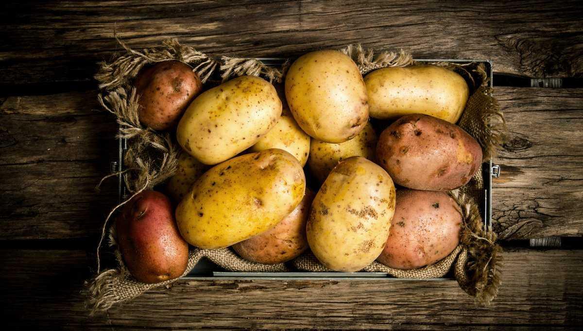 gnili-kartofelya-foto-video-pochemu-gniyot-kartofel-meryi-zashhityi-i-borbyi-1