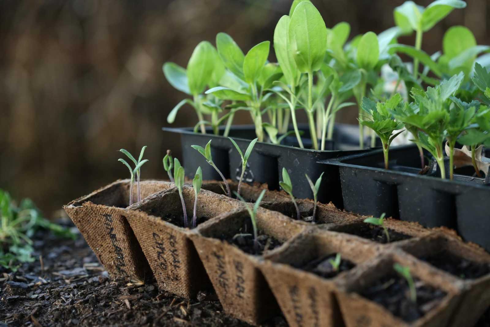 kak-podgotovit-semena-k-posevu-poleznye-sovety-i-rekomendatsii