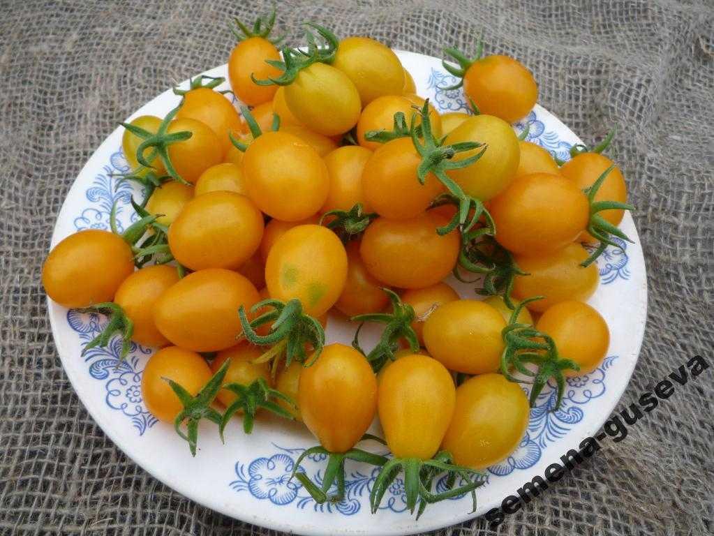 pomidory-cherri-foto-video-luchshie-sorta-opisanie-lichnyj-opyt-vyrashhivaniya-48