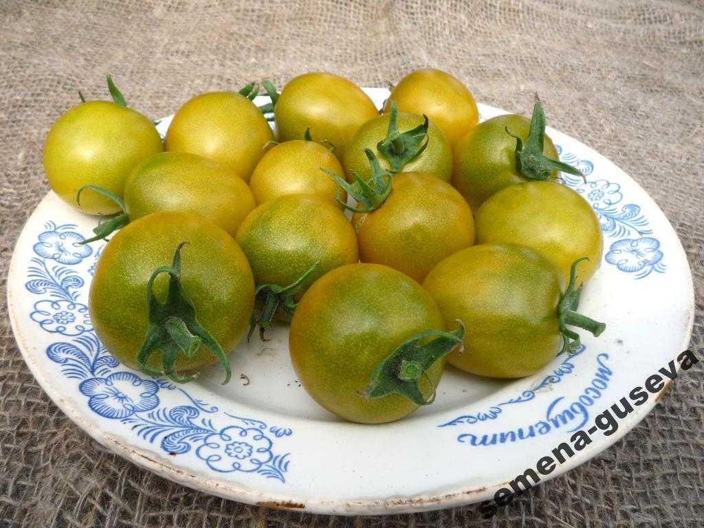 pomidory-cherri-foto-video-luchshie-sorta-opisanie-lichnyj-opyt-vyrashhivaniya-66