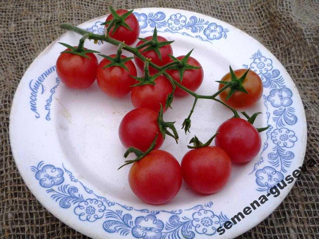 pomidory-cherri-foto-video-luchshie-sorta-opisanie-lichnyj-opyt-vyrashhivaniya-36