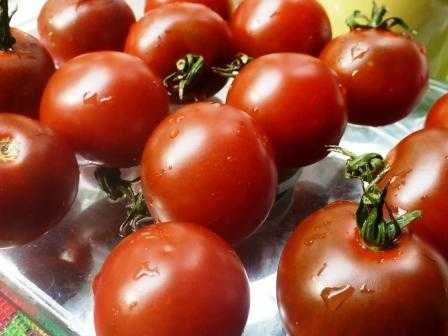 pomidory-cherri-foto-video-luchshie-sorta-opisanie-lichnyj-opyt-vyrashhivaniya-39