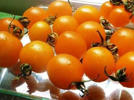 pomidory-cherri-foto-video-luchshie-sorta-opisanie-lichnyj-opyt-vyrashhivaniya-52