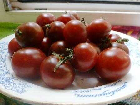 pomidory-cherri-foto-video-luchshie-sorta-opisanie-lichnyj-opyt-vyrashhivaniya-40
