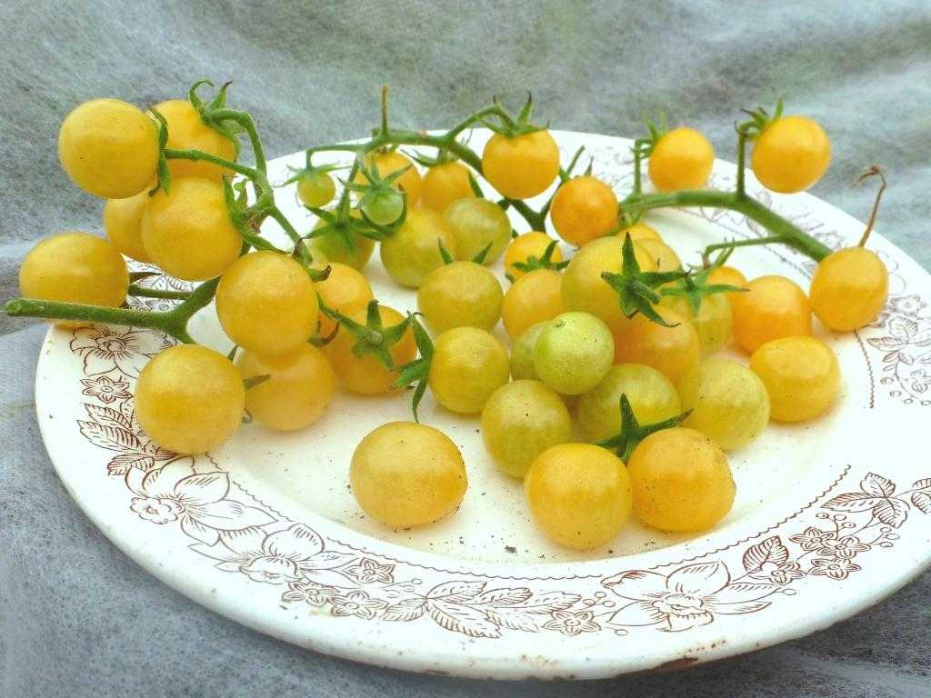pomidory-cherri-foto-video-luchshie-sorta-opisanie-lichnyj-opyt-vyrashhivaniya-53