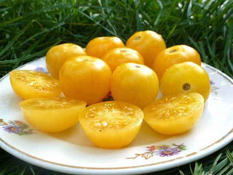 pomidory-cherri-foto-video-luchshie-sorta-opisanie-lichnyj-opyt-vyrashhivaniya-30