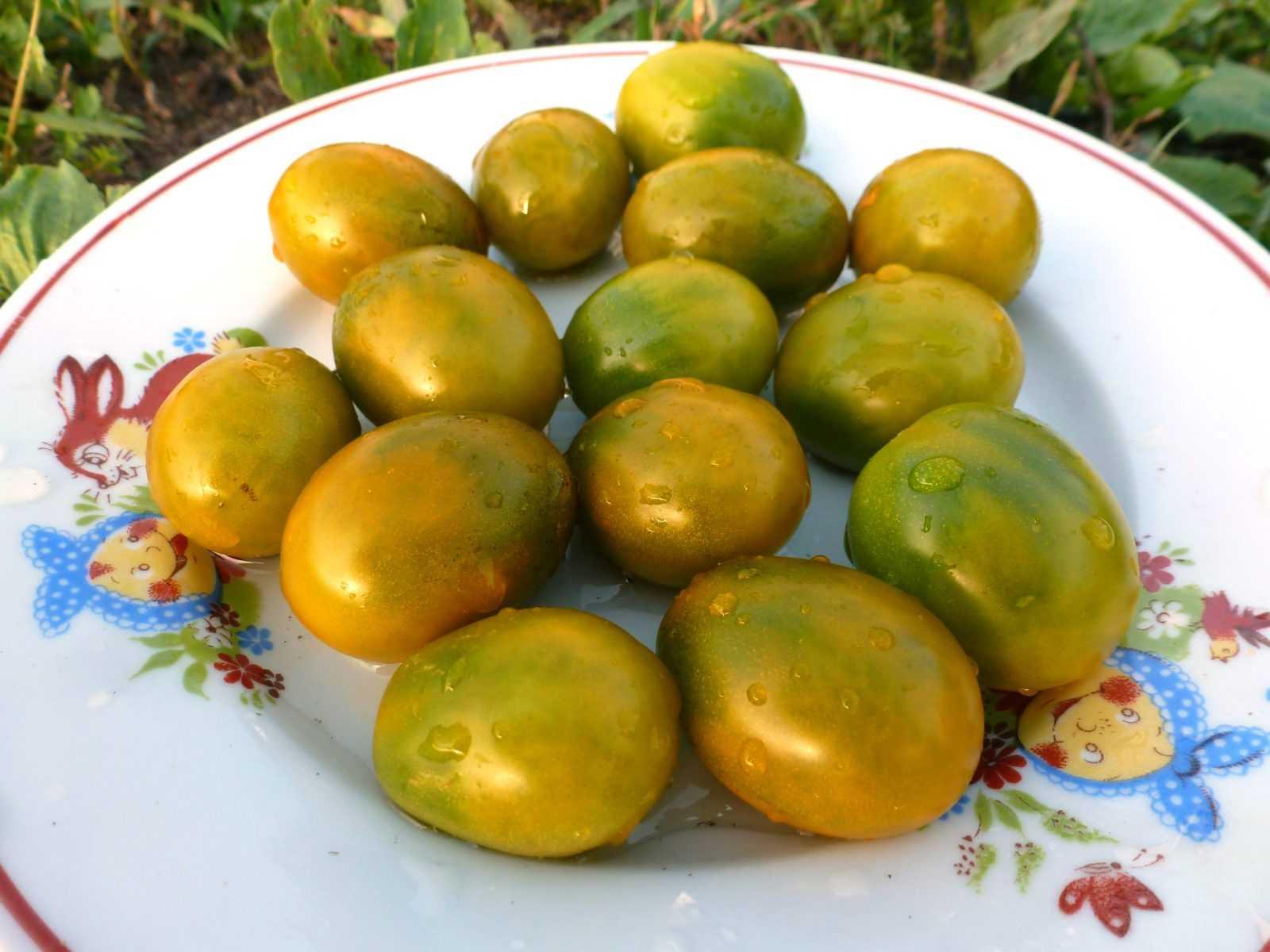 pomidory-cherri-foto-video-luchshie-sorta-opisanie-lichnyj-opyt-vyrashhivaniya-63
