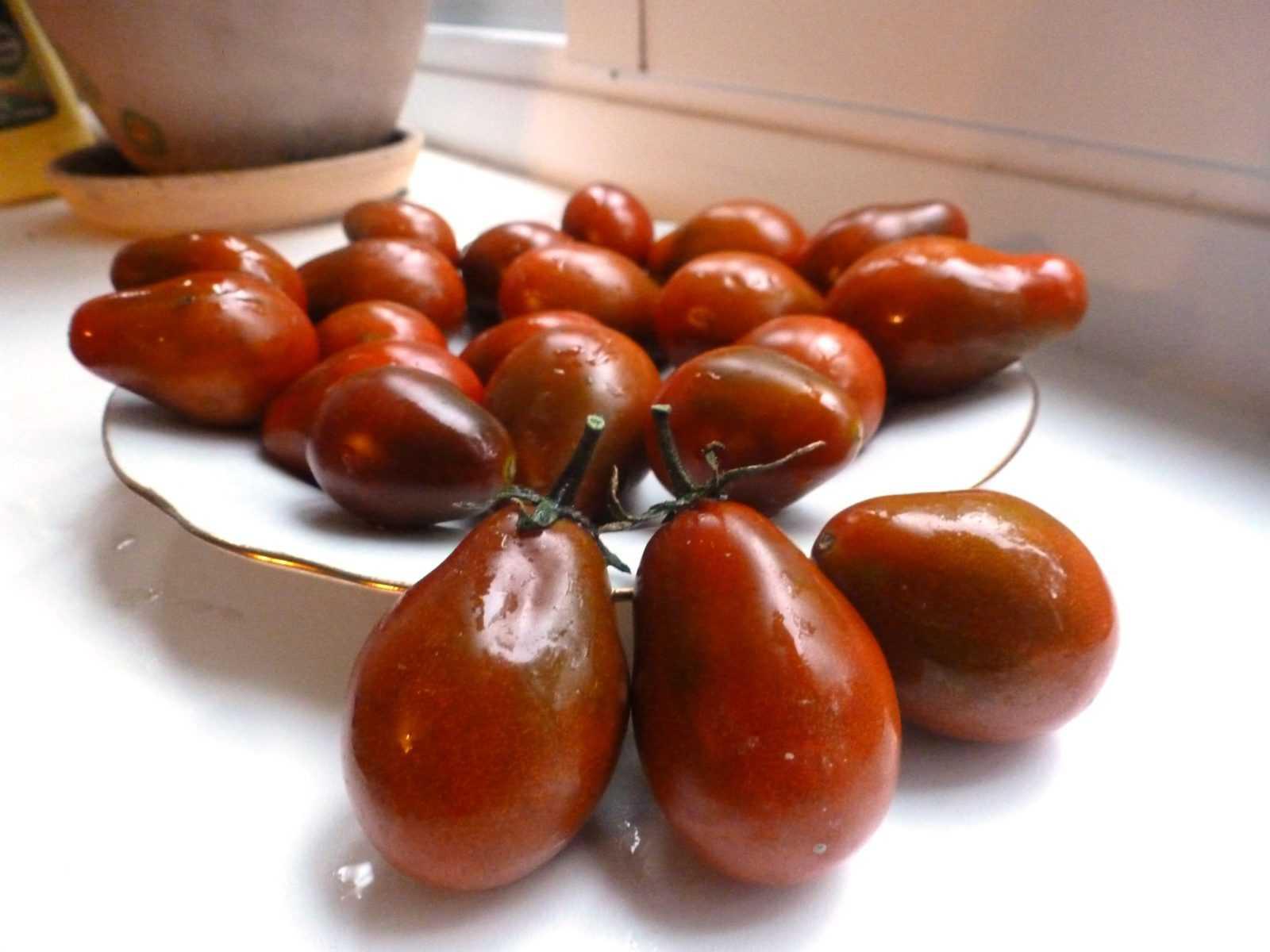 pomidory-cherri-foto-video-luchshie-sorta-opisanie-lichnyj-opyt-vyrashhivaniya-25