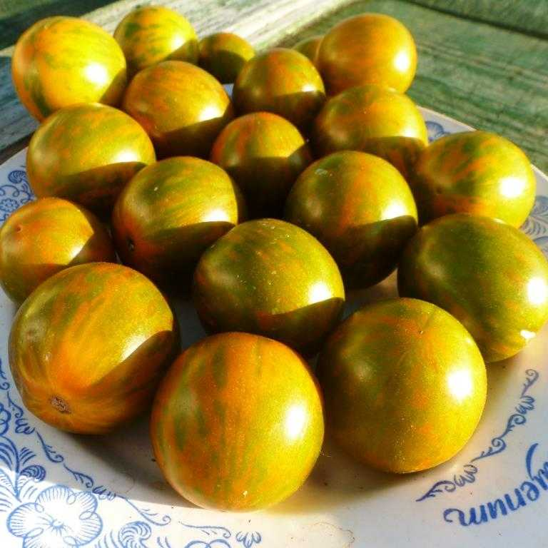 pomidory-cherri-foto-video-luchshie-sorta-opisanie-lichnyj-opyt-vyrashhivaniya-15