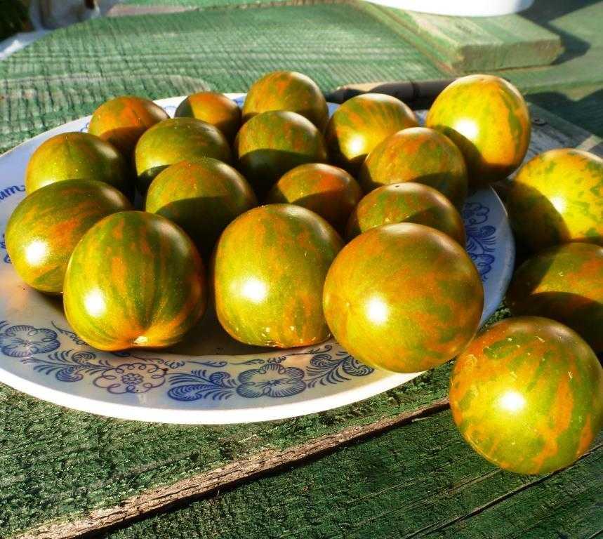 pomidory-cherri-foto-video-luchshie-sorta-opisanie-lichnyj-opyt-vyrashhivaniya-16