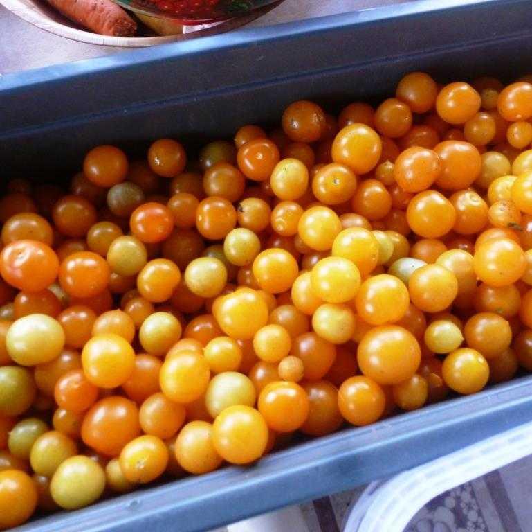 nizkoroslye-pomidory-foto-video-sorta-dlya-vyrashhivaniya-doma-i-v-teplitse-11