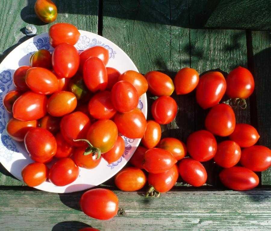 pomidory-cherri-foto-video-luchshie-sorta-opisanie-lichnyj-opyt-vyrashhivaniya-14