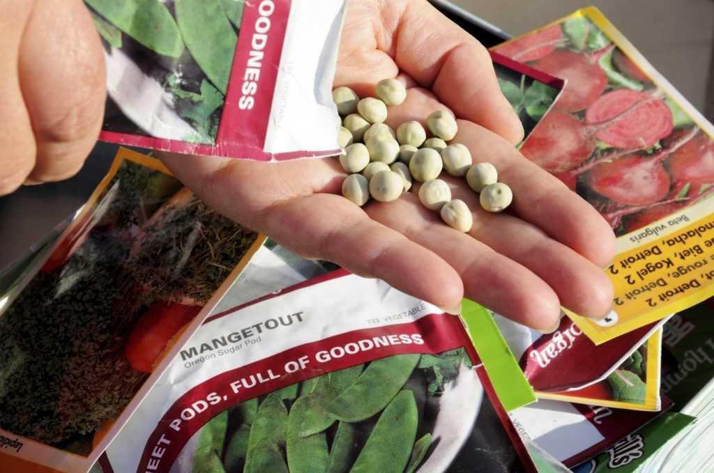 vybiraem-semena-tsvetov-foto-video-gde-i-u-kogo-pokupat-semena-tsvetov-1