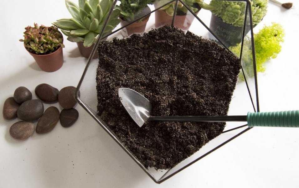 florarium-foto-video-vidy-i-ustrojstva-kak-sdelat-svoimi-rukami-6