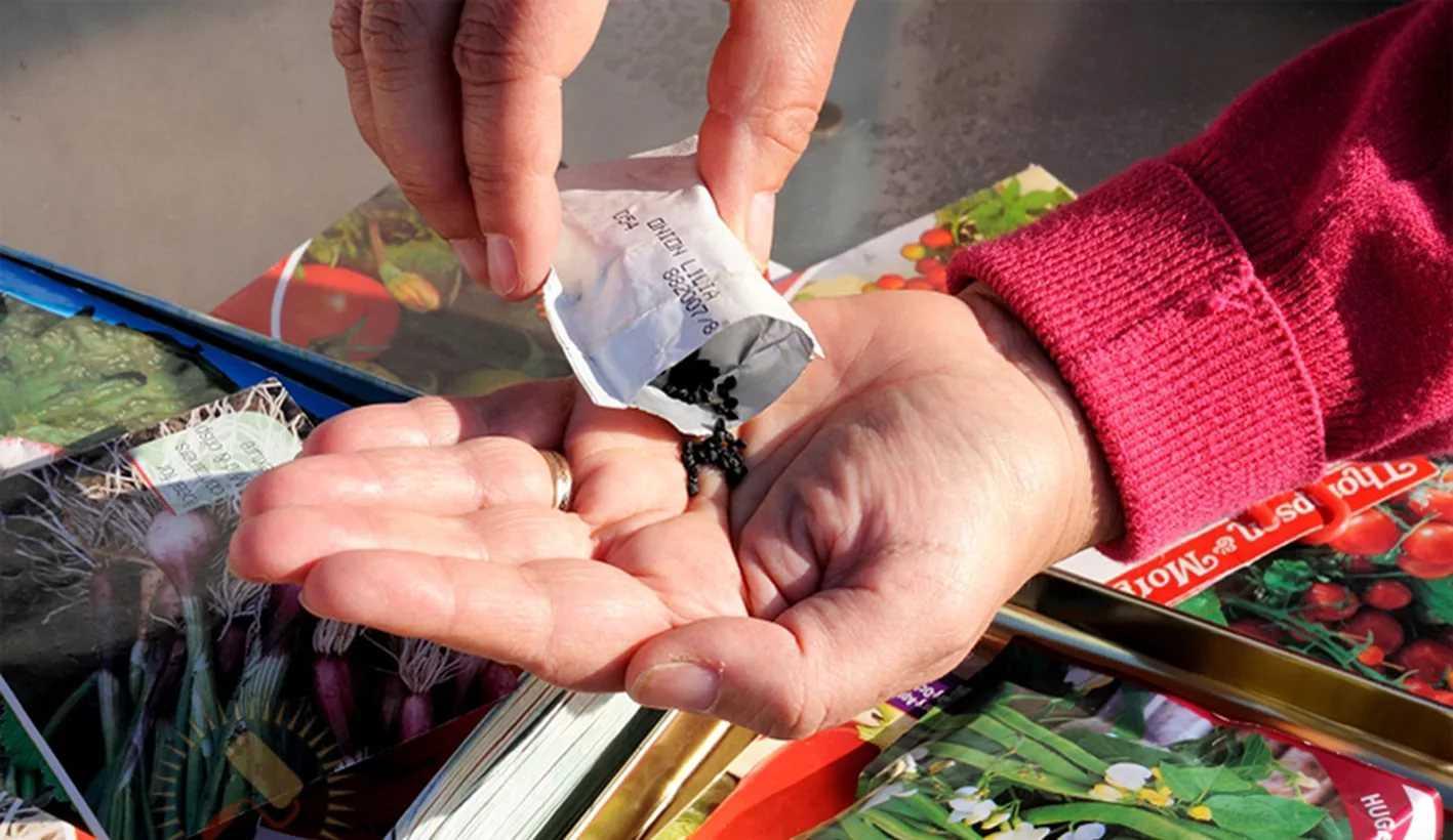 vybiraem-semena-tsvetov-foto-video-gde-i-u-kogo-pokupat-semena-tsvetov-11