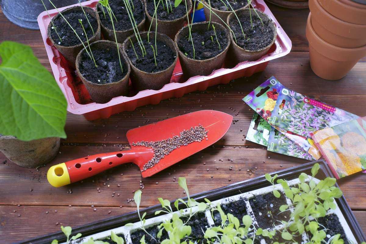 vybiraem-semena-tsvetov-foto-video-gde-i-u-kogo-pokupat-semena-tsvetov-10