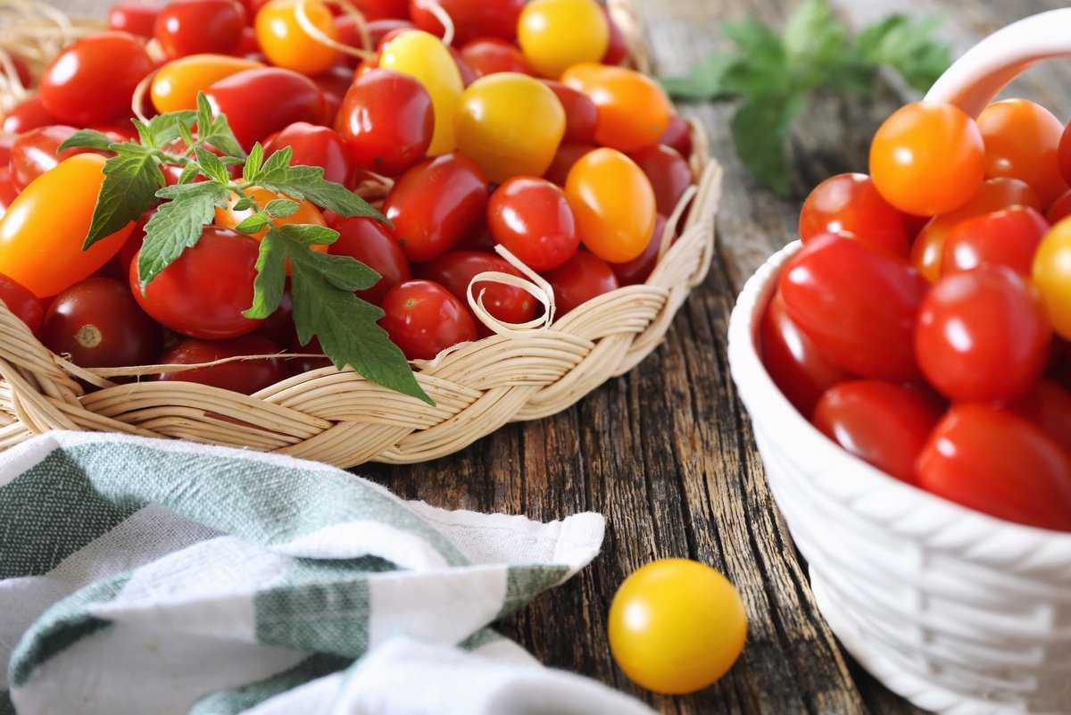 pomidory-cherri-foto-video-luchshie-sorta-opisanie-lichnyj-opyt-vyrashhivaniya-1
