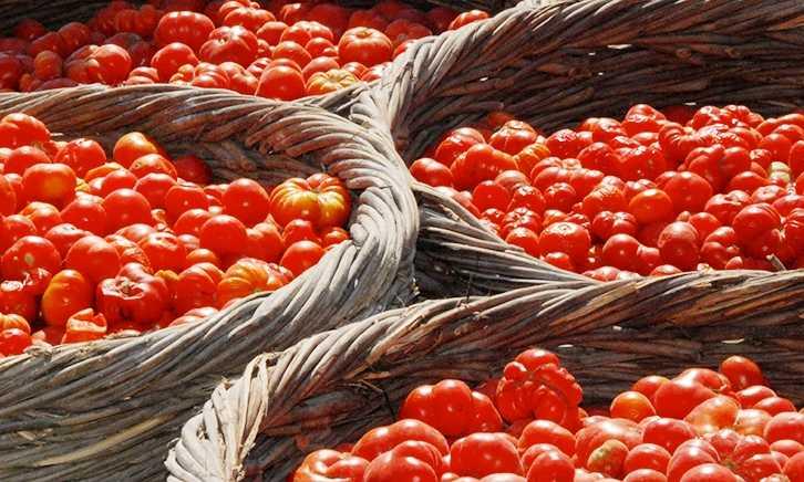 pomidory-cherri-foto-video-luchshie-sorta-opisanie-lichnyj-opyt-vyrashhivaniya-73