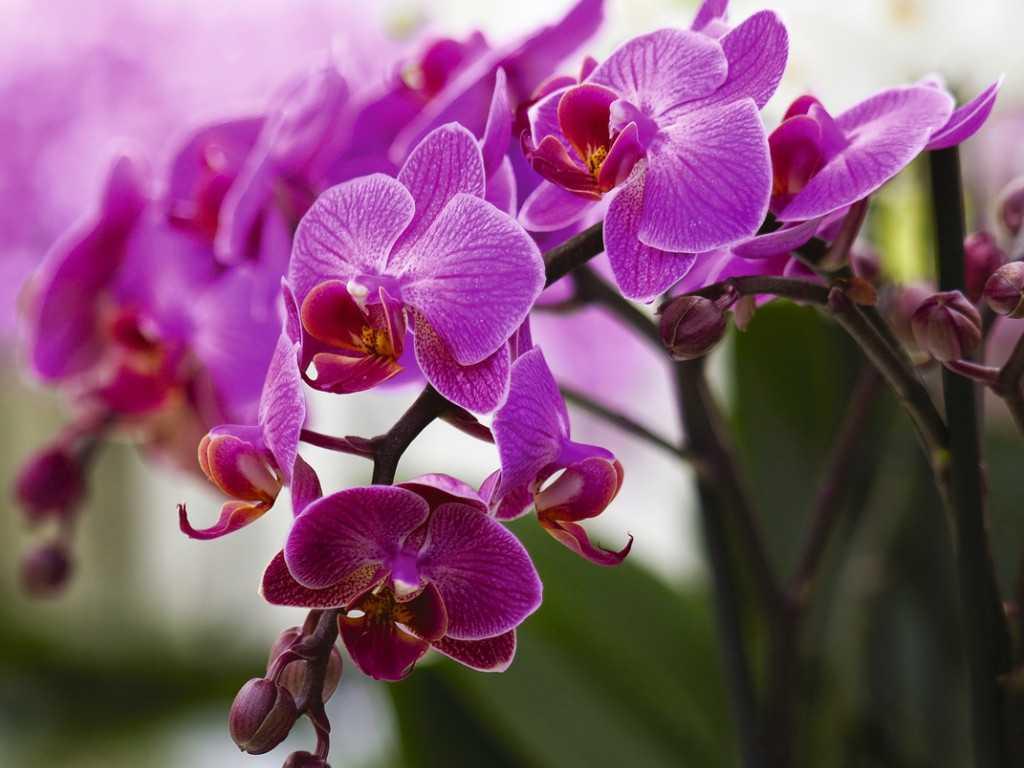kak-pravilno-uhazhivat-za-orhideej-foto-video-otvety-na-vazhnye-voprosy-9
