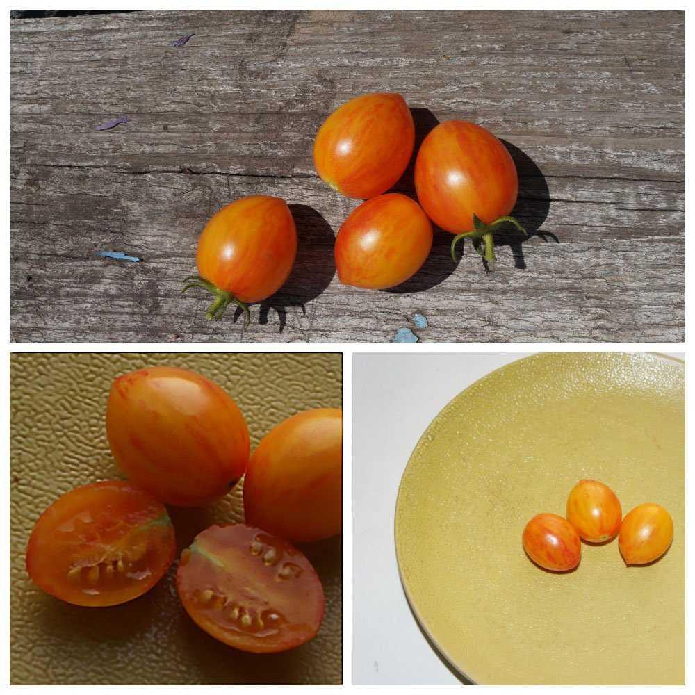sladkie-sorta-cherri-foto-video-opisanie-tomaty-s-fruktovym-vkusom-5