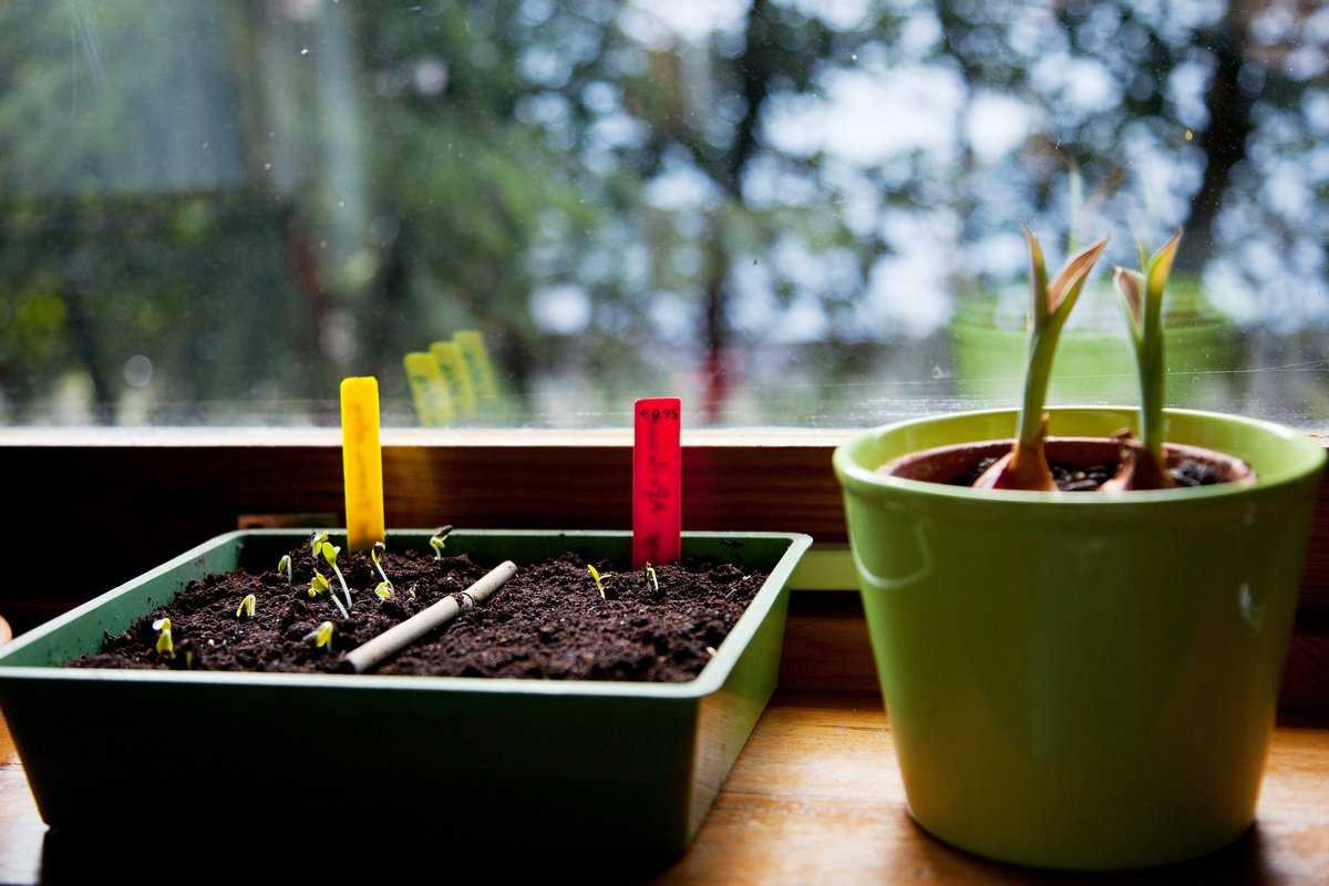 pochemu-ne-vshodyat-semena-tsvetov-foto-video-osnovnye-oshibki-tsvetovodov-1