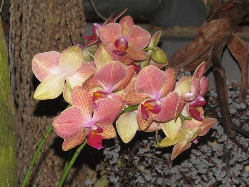 kak-pravilno-uhazhivat-za-orhideej-foto-video-otvety-na-vazhnye-voprosy-5