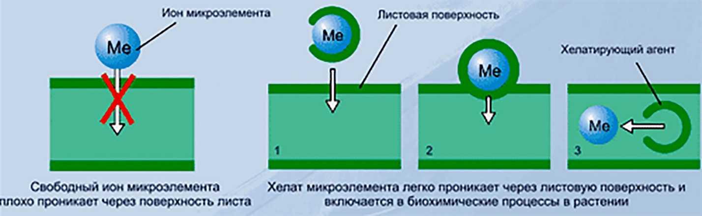 dratsena-domashnyaya-foto-video-uhod-v-domashnih-usloviyah-32