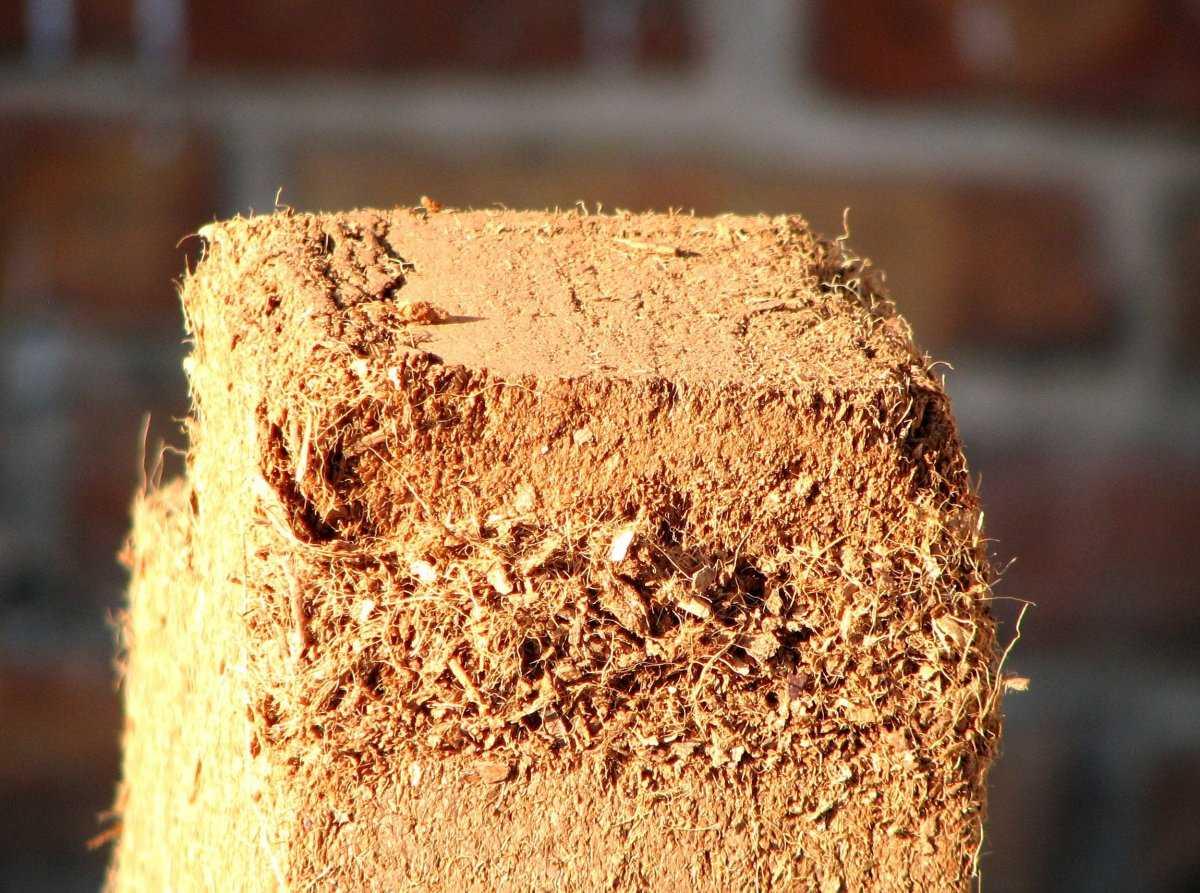 kak-ispolzovat-kokosovyj-substrat-foto-video-preimushhestva-nedostatki-2