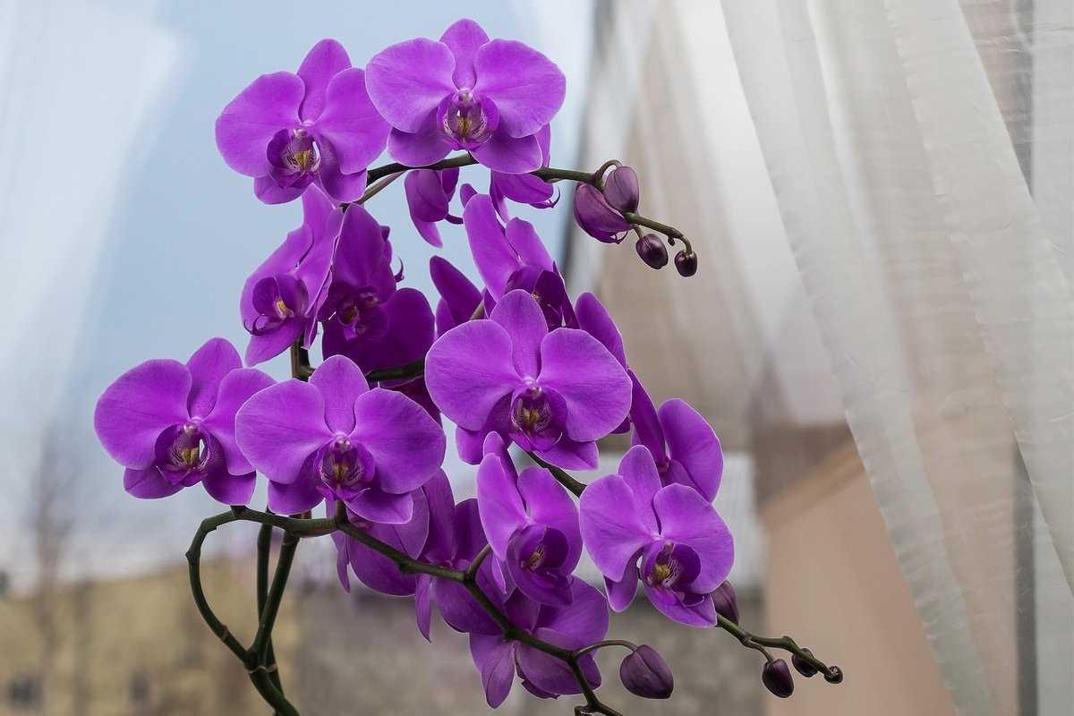 kak-pravilno-uhazhivat-za-orhideej-foto-video-otvety-na-vazhnye-voprosy-1