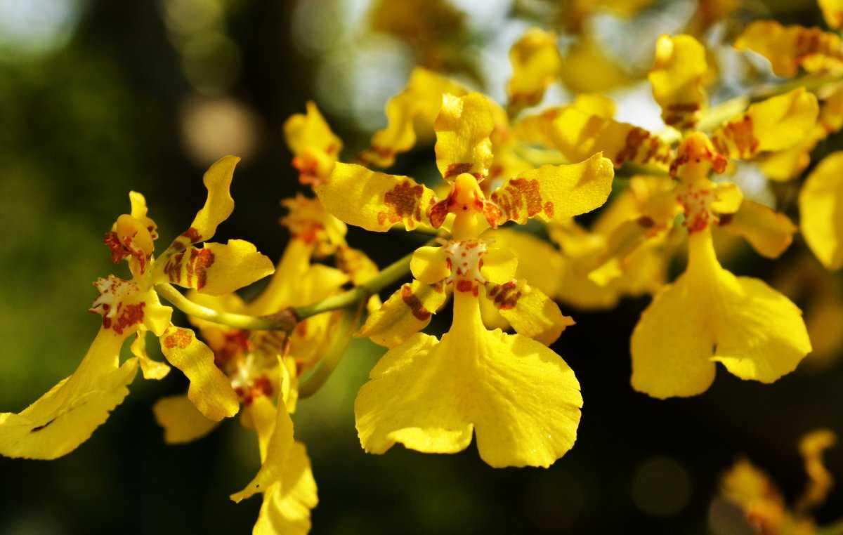 kak-pravilno-uhazhivat-za-orhideej-foto-video-otvety-na-vazhnye-voprosy-7