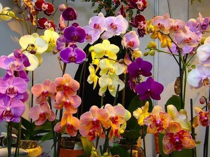 kak-pravilno-uhazhivat-za-orhideej-foto-video-otvety-na-vazhnye-voprosy